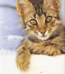 Cat 09 3e.jpg
