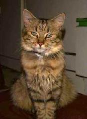 chats,saint-félix,dessin animé,aristochats,mistigri